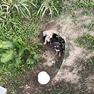 Zwei Hundefamilien gerettet