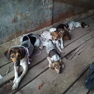 Kleine Hundefamilie in Not