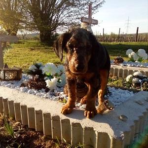 Mimi vom Friedhof
