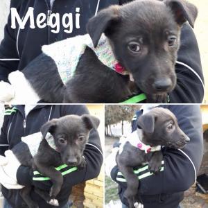 0144 Meggi 1