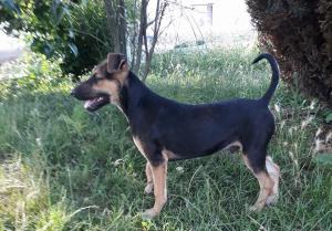 0182 Lobo  (4)