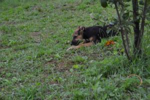 0182 Lobo  (7)