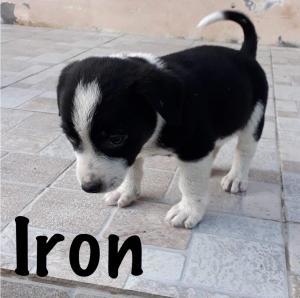 0207 Iron (3)