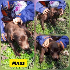 0396 Maxi 6