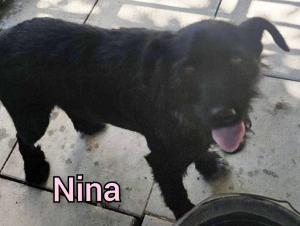 0454 Nina 4