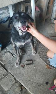 Hundefamilie 05